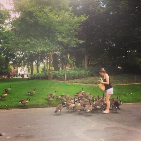 Feed the birds ♫