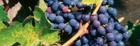Documentaire Sour Grapes
