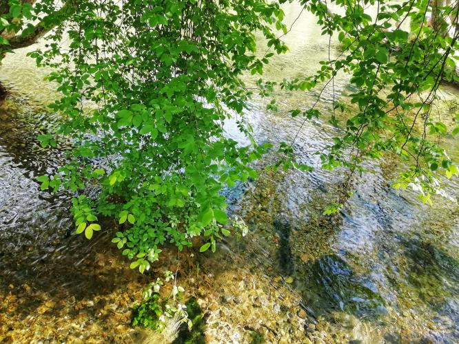 Leaves and river