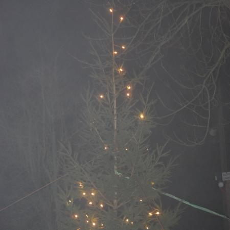 Kerstboom in de mist