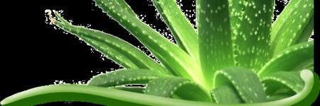 Questions about aloe vera drinkgel.