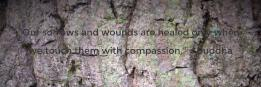 Our sorrows and wounds are healed only when  we touch them with compassion. ~ Buddha