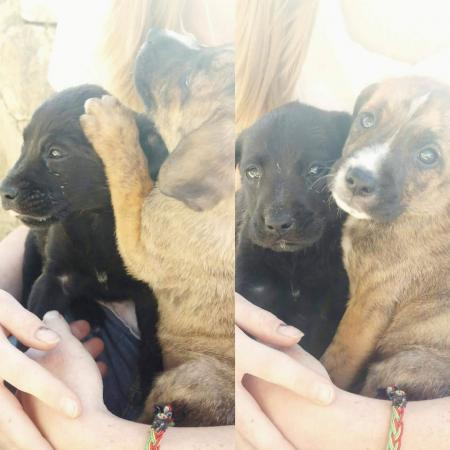 Freya & Thor, the abandoned puppies in Spain...