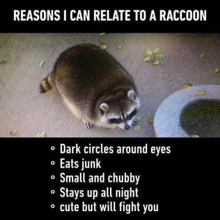 Me vs. Raccoon