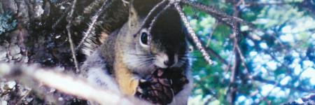 Traveling Photographs- Canadian Squirrel