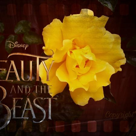 Beauty and the Beast sieraden