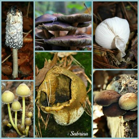 Paddenstoelen collage