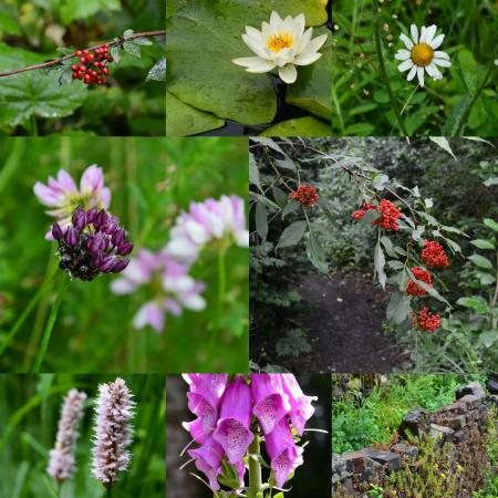 Natuurfoto's collage Heemtuin