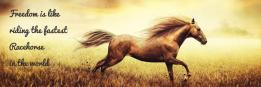 Freedom is like riding the fastest Racehorse in the world