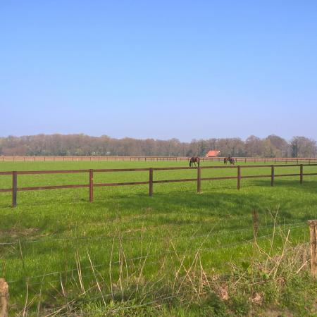 weiland in zomers weer