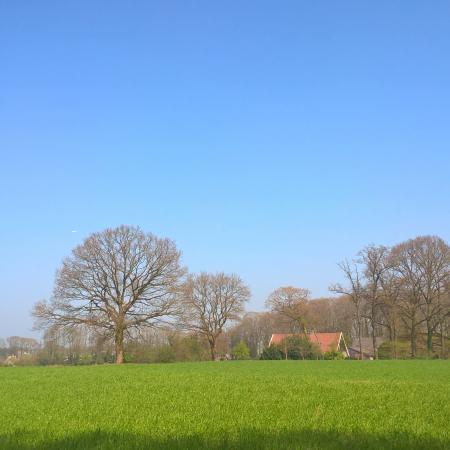 zomers weiland