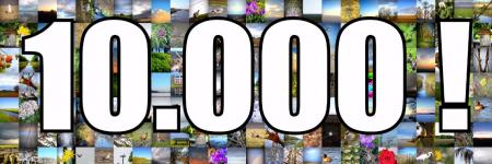YES.....10.000! Blogviews....