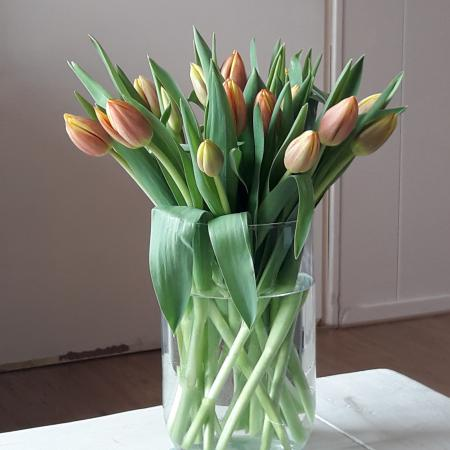 Feel good tulpen
