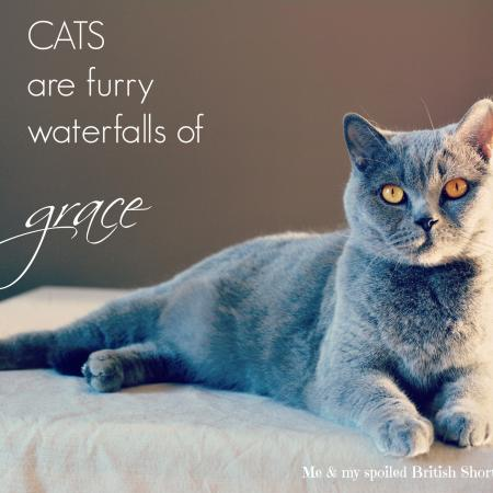 Cats are furry waterfalls of grace