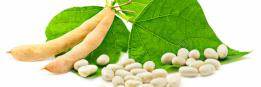 What have you BEAN eating?: Sojabonen superfood of superfout?