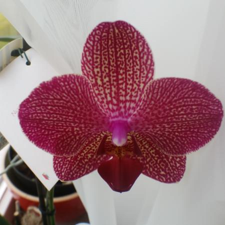 Orchidee hobby