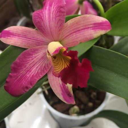 Special Orchid