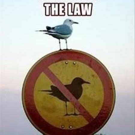 Breaking the law