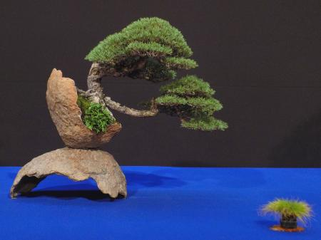 Bonsai Trophy 2019