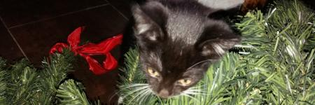 MyLife: Kerstboom