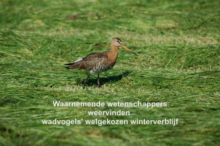 Tautogram wadvogels